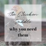 Beautiful hens with roughed up, broken, and missing feathers? The chicken saddle or hen apron is the easy DIY answer. #chickensaddle #chickensaddlediy #chickensaddleaprons #chickenapron #chickenfeatherdamage