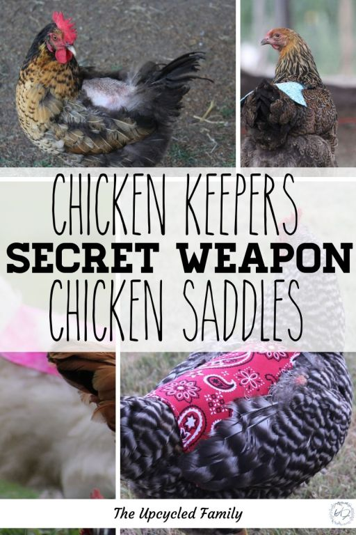 how to make a chicken saddle apron