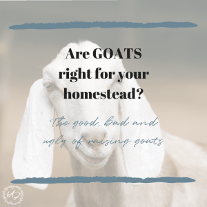 goats-feature