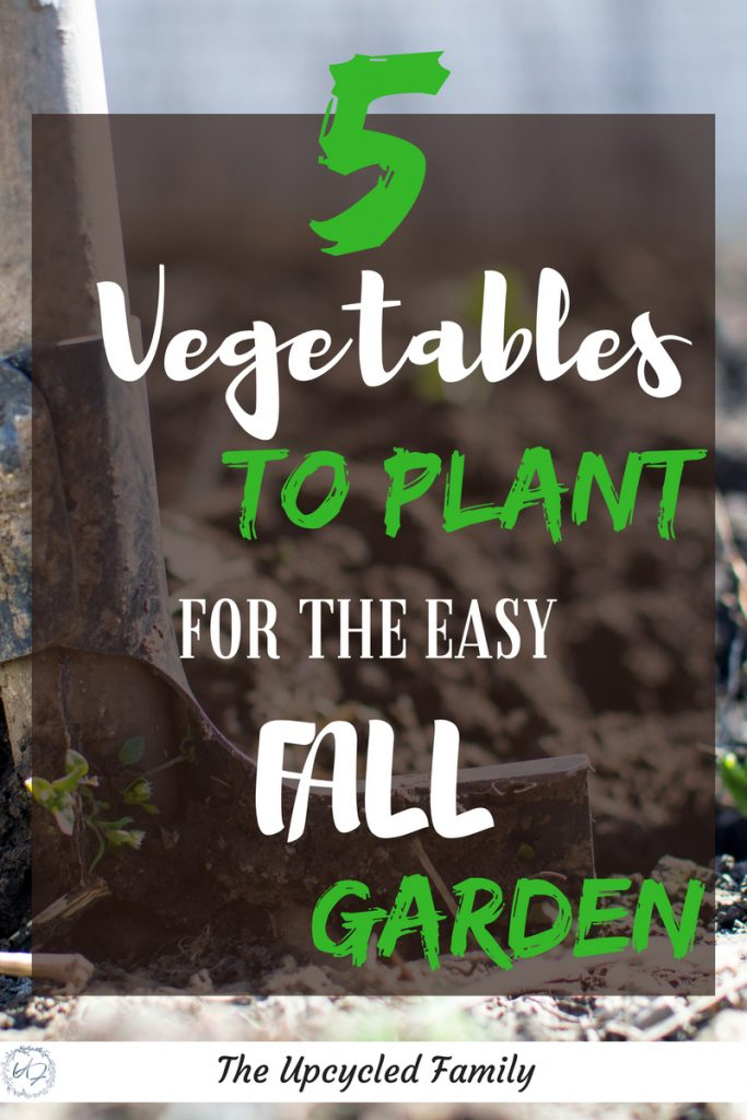 5 fall vegetables to plant