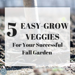 fall vegetables to plant