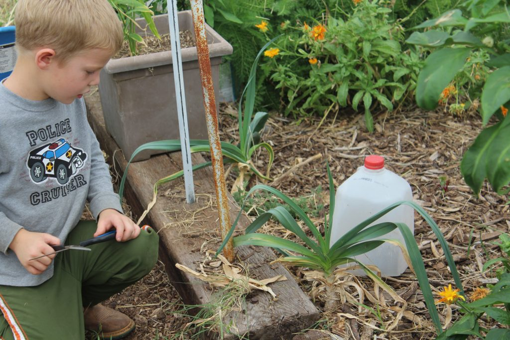 Boy in a garden learning to grow vegetables