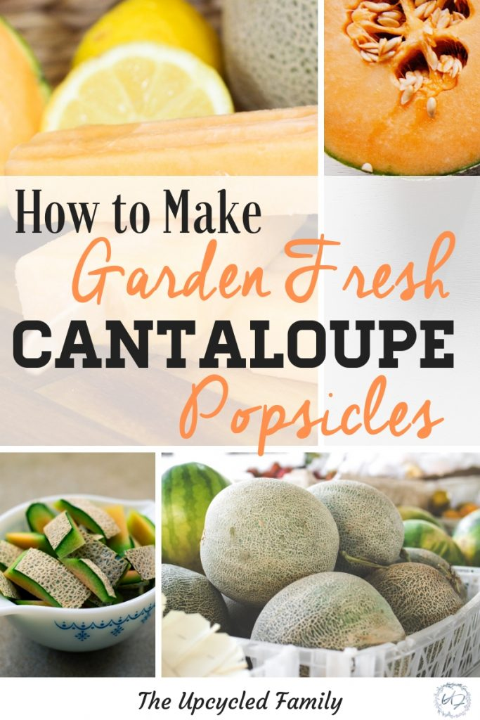 Need more fun ways to use all that garden-fresh cantaloupe. Try these simple, healthy cantaloupe popsicle recipe. Made with just 4 healthy ingredients. #popsiclerecipe #healthy #easy #fruit #homemade #vegan #cantaloupe #gardenfreshrecipes #toddler #simple