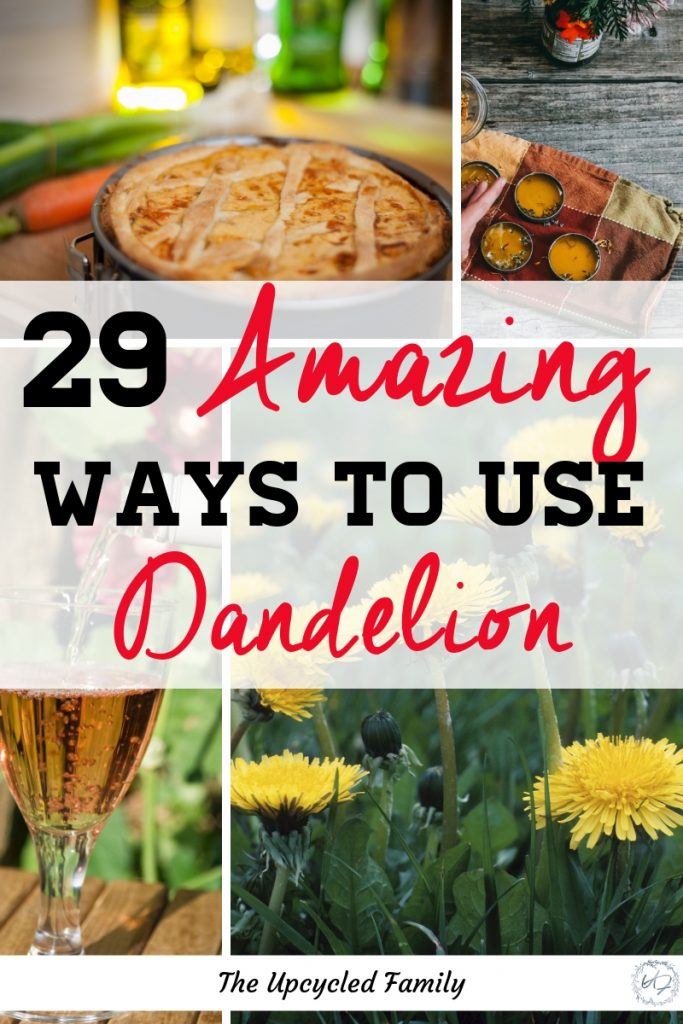 Put those healthy little dandelions to good use with these 29 Amazing ways to use dandelion. With everything from Dandelion recipes for wine to healing salve! #dandelion #greens #benefitsof #homeremedies #food #salad #tea #wine #cooking #recipes #dandelionrecipes