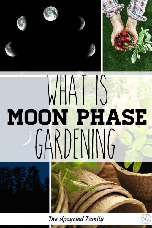 moon phase gardening