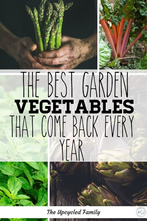 Are you new to gardening or looking for a way to maximize your garden yields without maximizing your time in the garden? Consider a perennial garden! 13 of the Best veggies (and a few herbs) to plant once and harvest for years and years to come. #perennialgarden #vegetables #perennialgardenideas #perennialgardenherbs #lowmaintenance #ideas #easy #edible #permaculturegarden #foodforestgarden