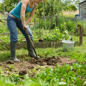 grow your own food gardening