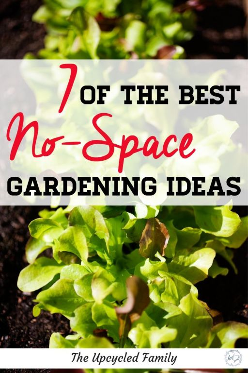 7 of the best no-space gardening ideas