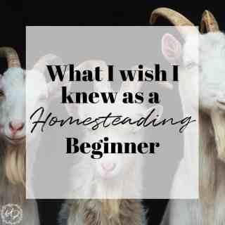 homesteading beginner