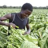 Promoting Smallscale Community Based Agricultural Initiative As A Tool For Rapid Socio-Economic Recovery And Household Food Security
