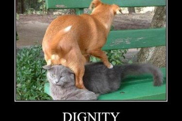Online Dating with dignity