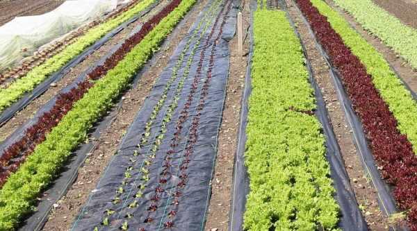 weed-free beds landscape