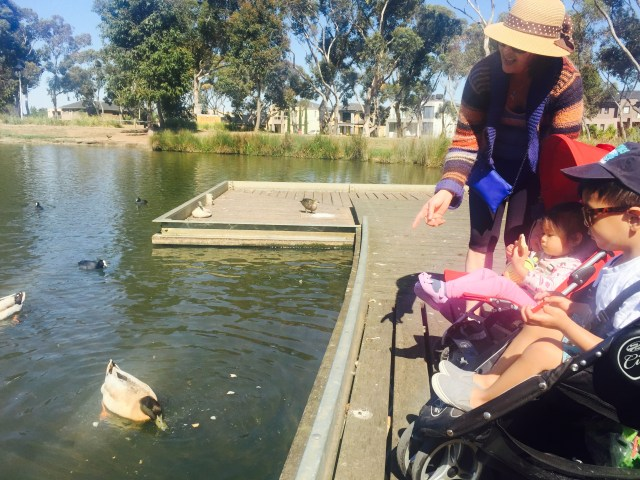 ducks with lola