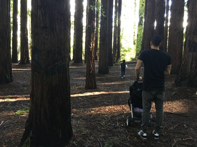 kid friendly Melbourne forest walks