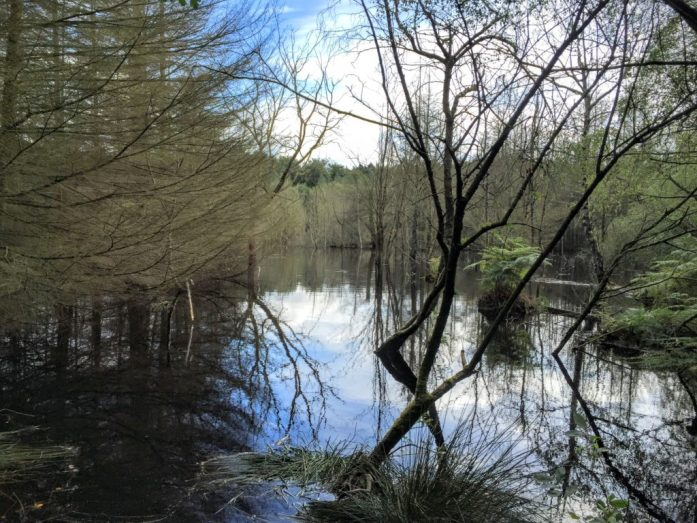 Delamere Forest, Cheshire | The Urban Wanderer | Sarah Irving