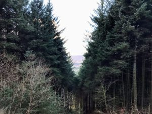 Macclesfield Forest and Ridgegate Reservoir | Peak District Walks | Cheshire Walks | Forest | The Urban Wanderer | Sarah Irving | UK | Outdoor Blogger | Travel Blogger | Manchester Blogger