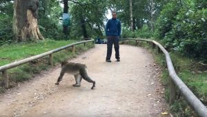 Trentham Monkey Forest   Days out from Manchester   Under 2 hours from Manchester   The Urban Wanderer   Sarah Irving   UK   Outdoor Blogger   Travel Blogger   Manchester Blogger