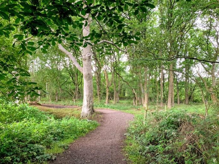 Windy Bank Wood Walk near Bents Garden Centre