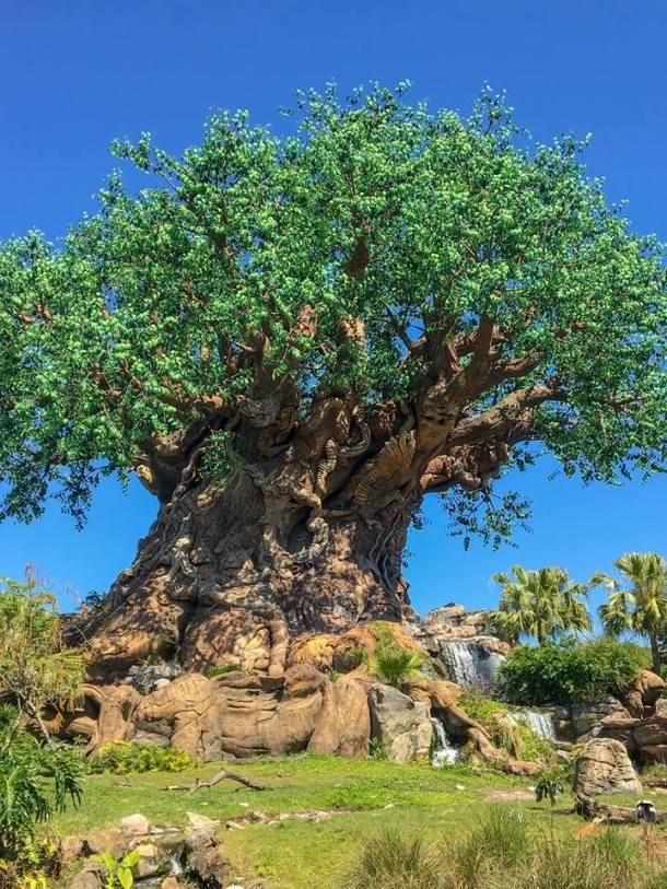 walt disney world, disney, animal kingdom, tree of life