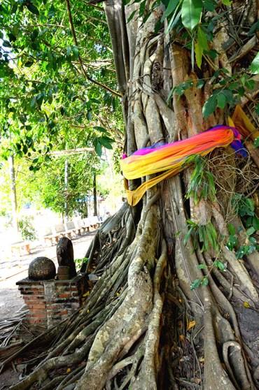 Spirit tree in Wat Bung Kung