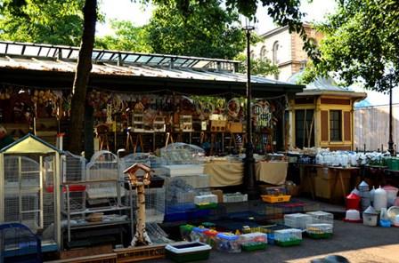 Bird Market 1