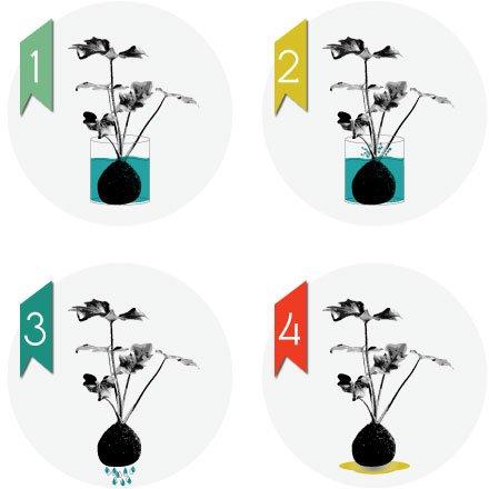 Watering process of kokedamas