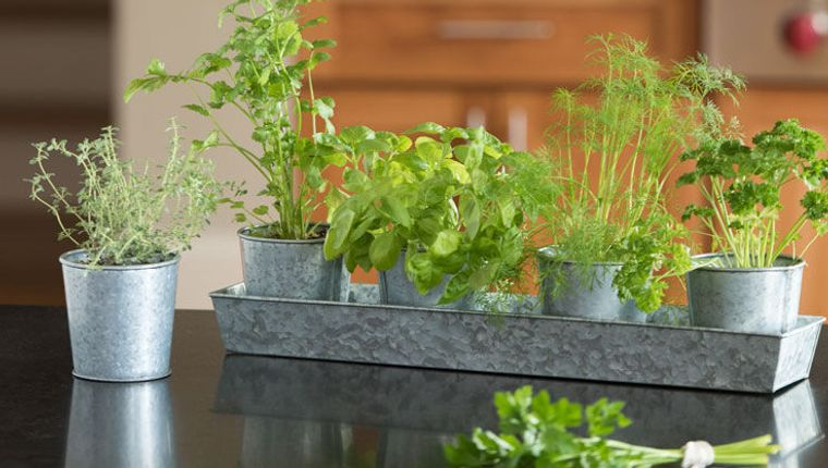 aromatic herbs cultivation