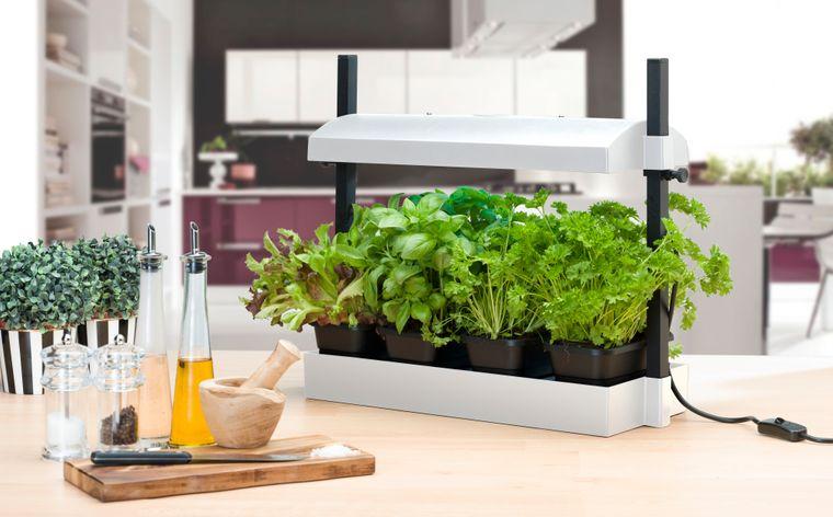growing herbs light