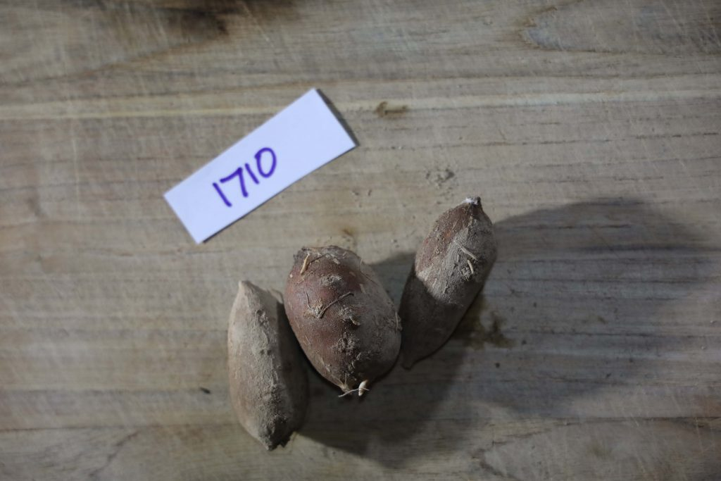Groundnut-Trial-1710