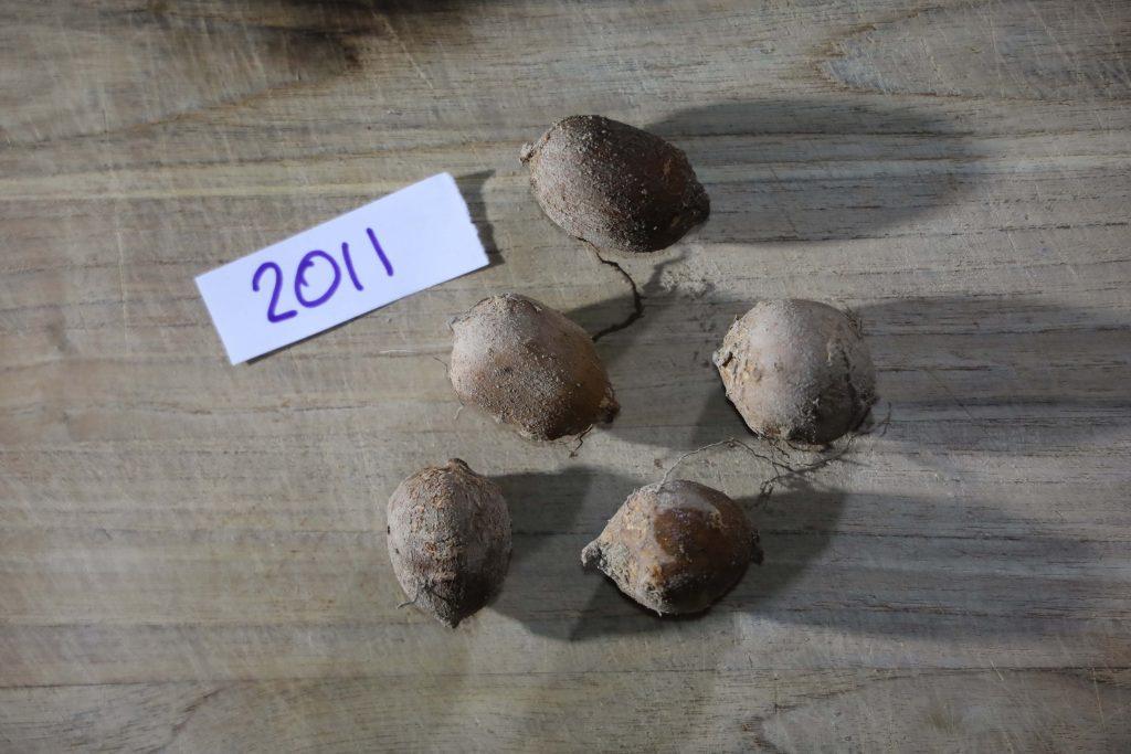 Groundnut-Trial-2011
