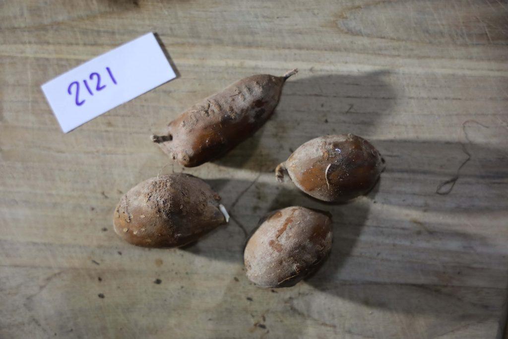 Groundnut-Trial-2121