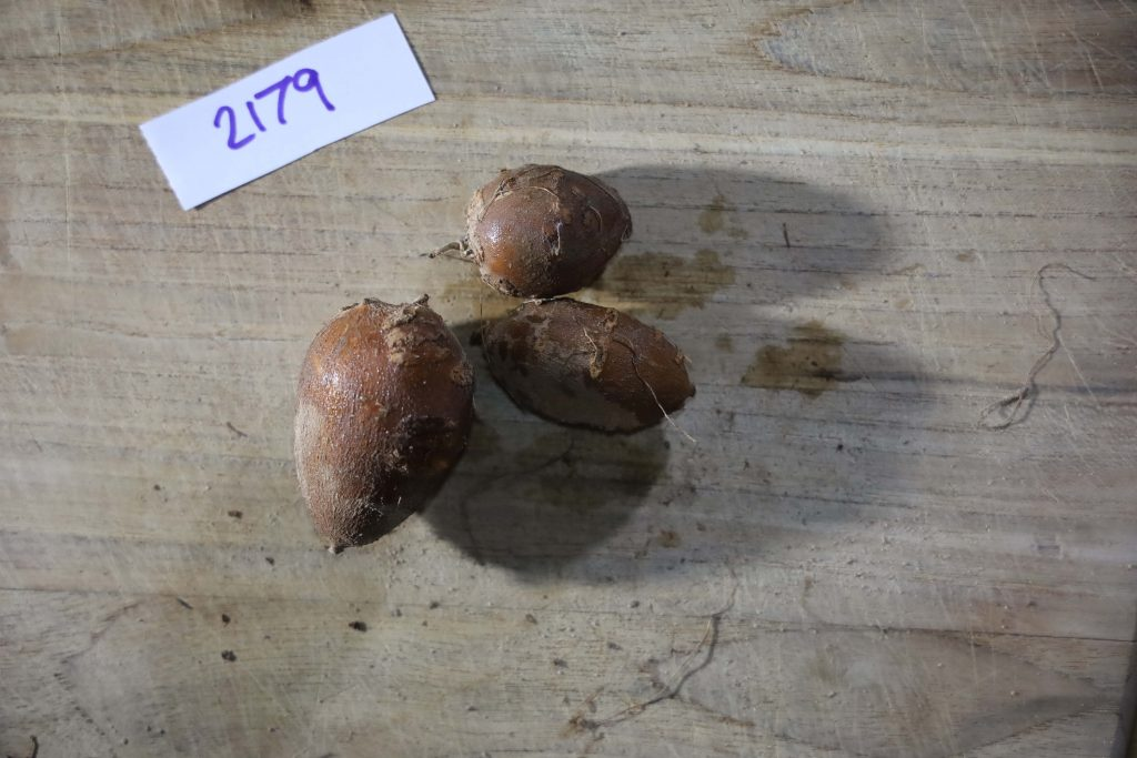 Groundnut-Trial-2179