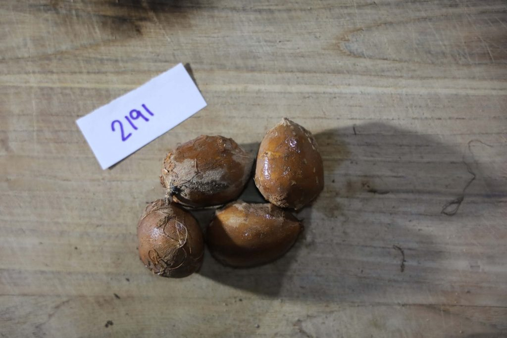 Groundnut-Trial-2191