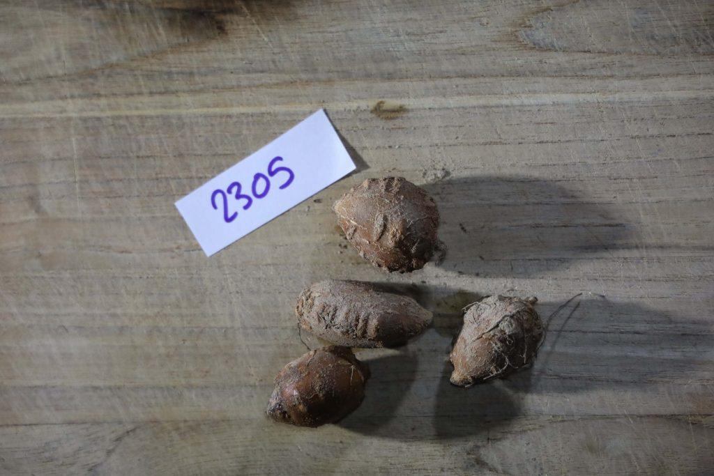 Groundnut-Trial-2305