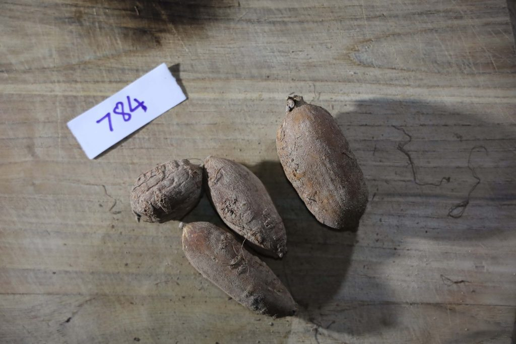 Groundnut-Trial-784