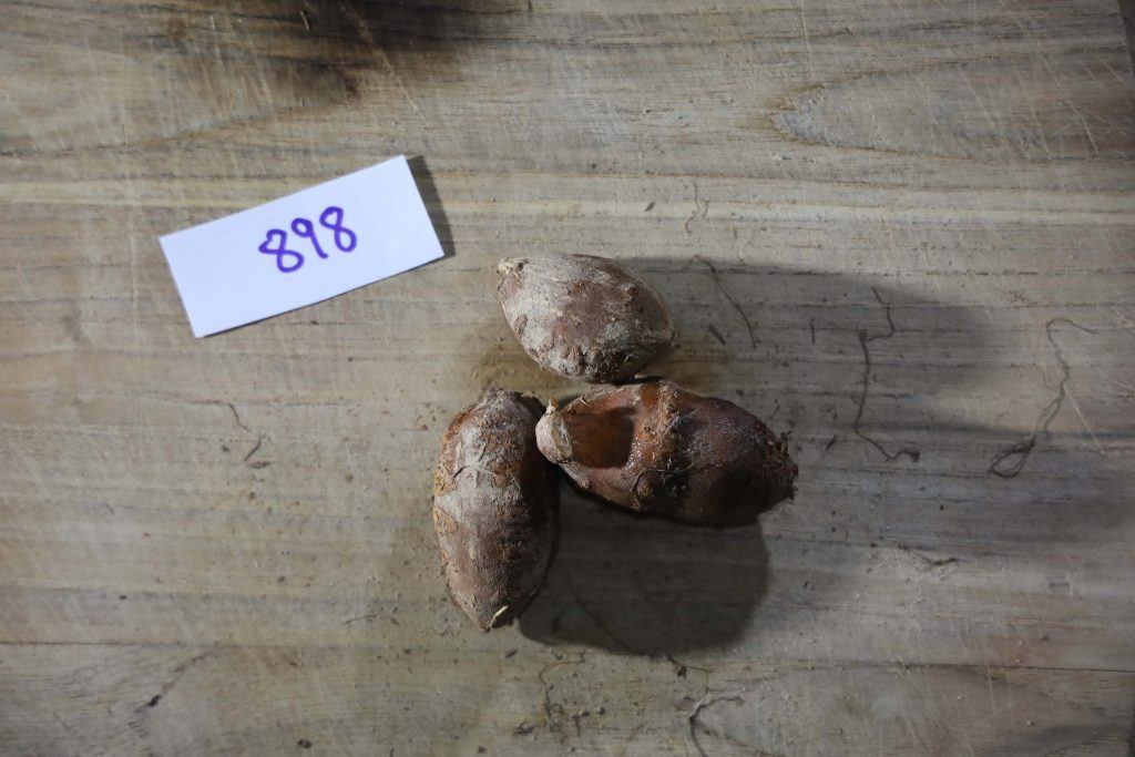 Groundnut-Trial-898