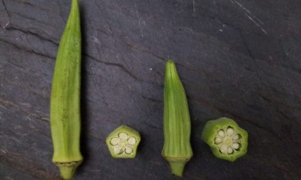 Okra Field Day and Taste Testing