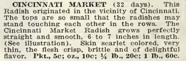 Cincinnati Market Radish
