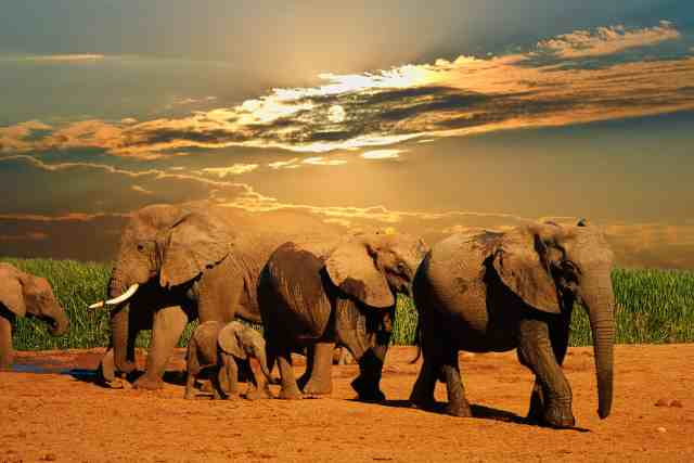 Cheapest Flights to Africa
