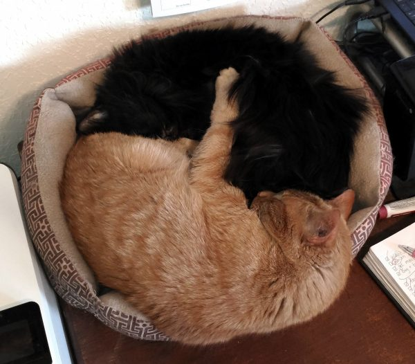 Loiosh & Hades curled up in a cat bed, nose to tail, in more-or-less the yin yang shape. Loiosh has his paw draped over Hades' side.