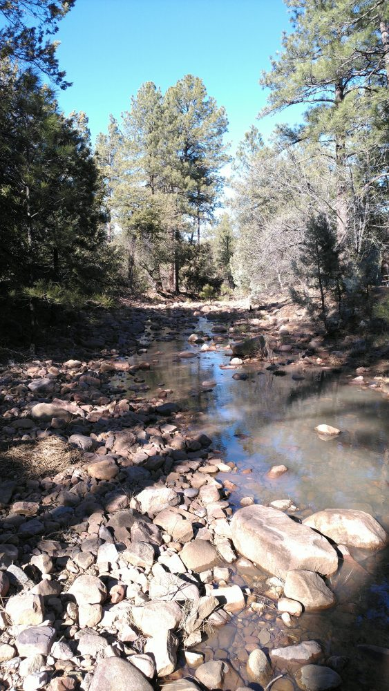 A view down a shallow, rocky creek, running between tall trees with the blue sky above.