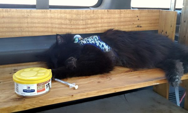 Hades is asleep on a wooden shelf in the van. In front of him is a lidded can of cat food & a syringe without the needle.