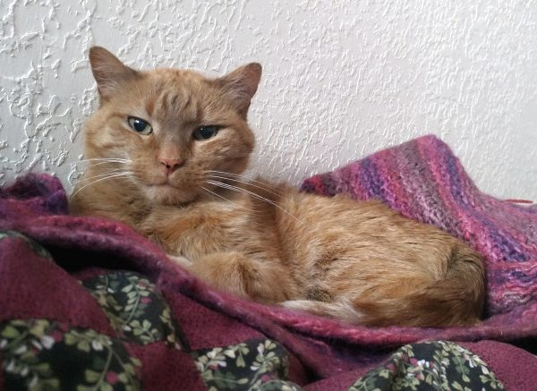 Loiosh is curled up on a pinky-purple knitted blanket. He's kinda giving the camera stinkeye.