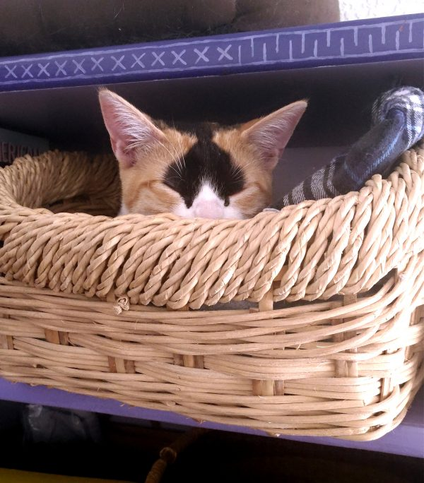 A smol cat in a big basket -- all that's visible is the top half of Zoey's head. Her nose is pink, her muzzle is white, her ears & most of her face are stripey orange, & she's got an upside-down black heart on her forehead.