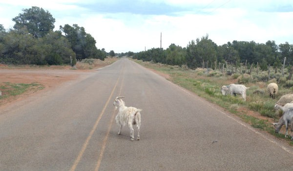The view down the road, which contains one single solitary goat who's standing in my way, gazing contemplatively off into the distance. Goats, I tell ya.