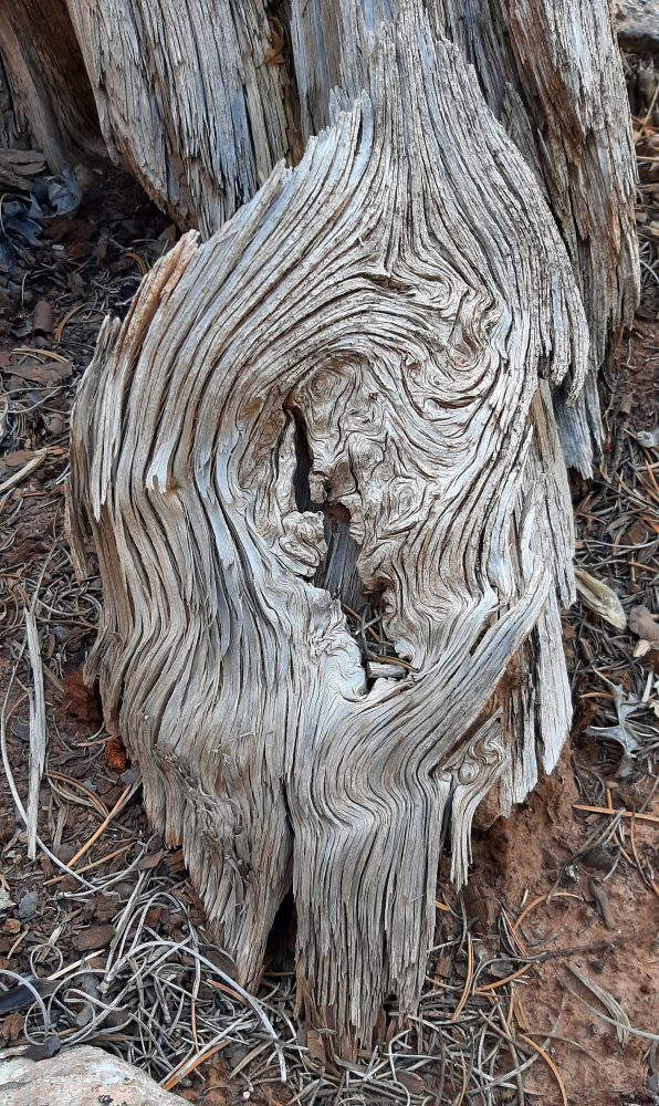 A deeply weathered piece of wood, grain lines swirling around a knot in the center.