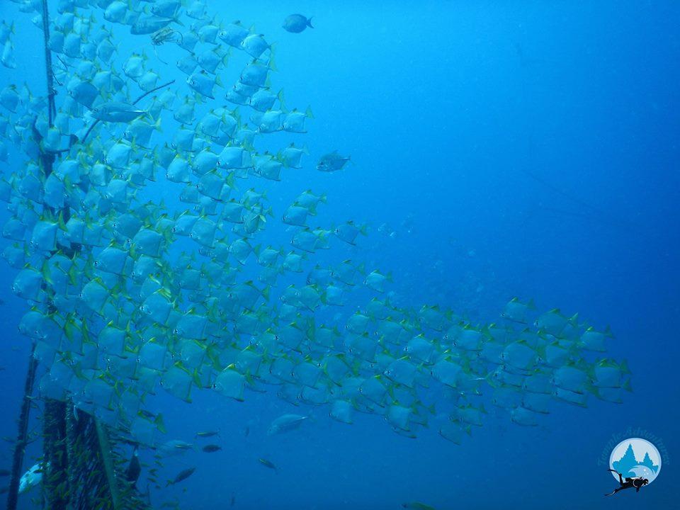 Scuba Diving, PUDUCHERRY