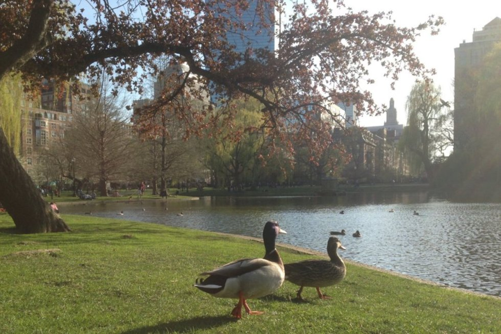 Boston Public Garden, Boston, Massachusetts, USA. Photo by Katerina Papathanasiou/The Vale Magazine