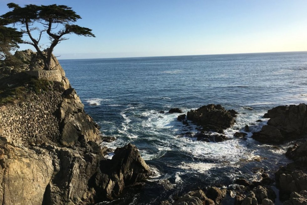 The Lone Cypress in Pebble Beach, California near Carmel-by-the Sea town.
