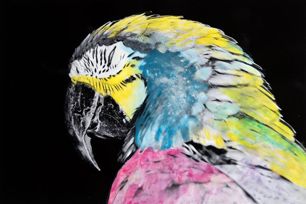 Photograph of a parrot painted over with watercolors by an achromat in Pingelap, Micronesia,